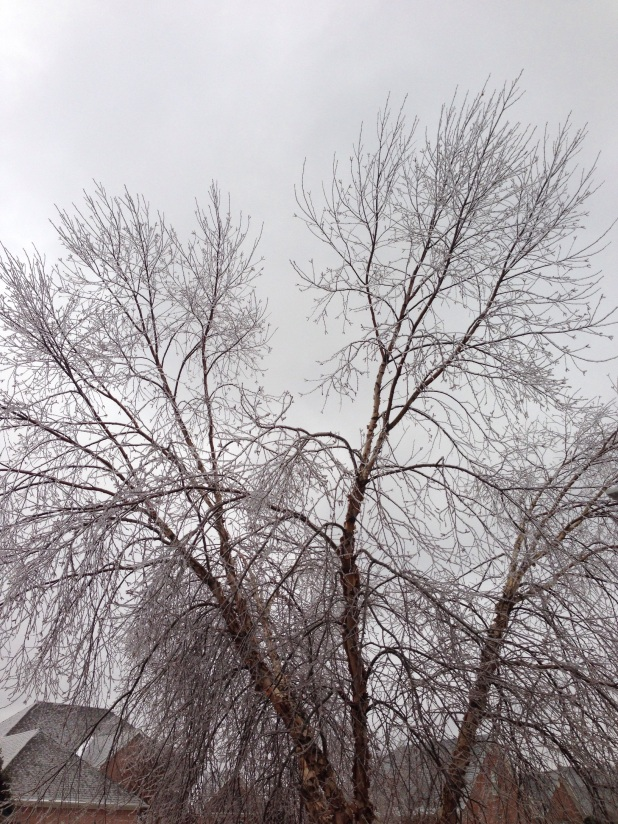2015/02/img_3121.jpg